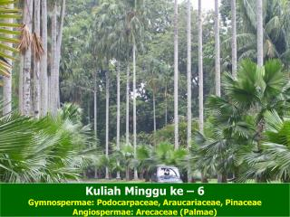 Kuliah Minggu ke – 6 Gymnospermae: Podocarpaceae, Araucariaceae, Pinaceae
