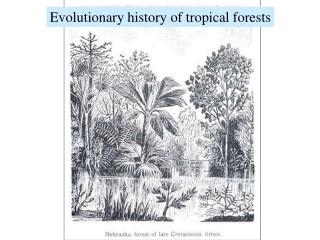 Evolutionary history of tropical forests