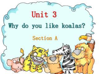 Why do you like koalas?