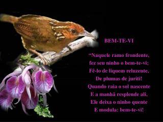 BEM-TE-VI   Naquele ramo frondente,  fez seu ninho o bem-te-vi; F -lo de liquem reluzente,  De plumas de juriti Quando r