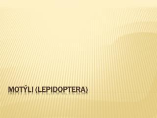 Motýli ( Lepidoptera )