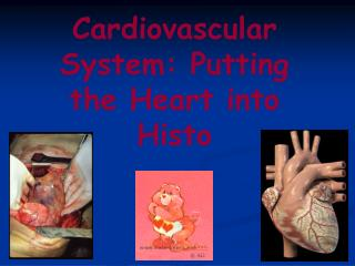Cardiovascular System: Putting the Heart into Histo