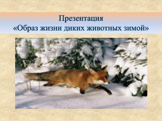 Презентация  «Образ жизни диких животных зимой»