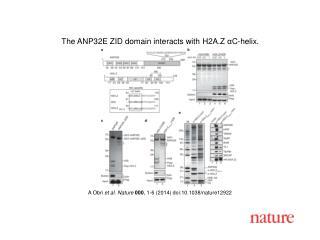A  Obri et al. Nature  000 , 1-6 (2014)  doi:10.1038/nature12922