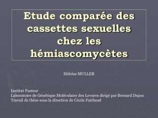 Etude comparée des cassettes sexuelles chez les hémiascomycètes