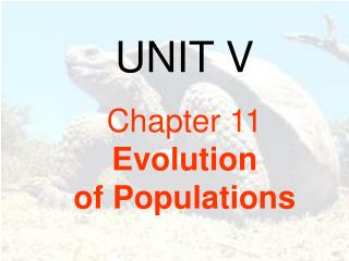 UNIT V Chapter 11               Evolution  of Populations