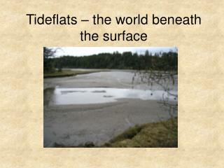 Tideflats – the world beneath the surface