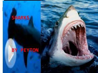 Sharks by  peyton