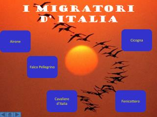 i migratori  d' Italia
