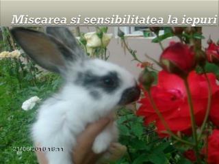 Miscarea si sensibilitatea  la  iepuri