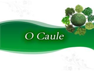 Sustentação de folhas, flores etc.; Condução de substâncias alimentares;