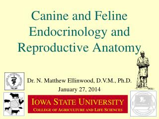 Canine and Feline Endocrinology and Reproductive Anatomy