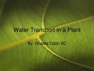 Water Transport in a Plant