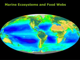 Marine Ecosystems and Food Webs