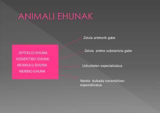 ANIMALI EHUNAK
