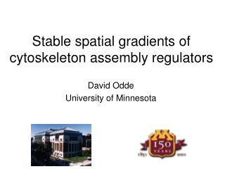 Stable spatial gradients of cytoskeleton assembly regulators