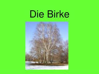 Die Birke