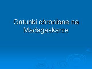 Gatunki chronione na Madagaskarze