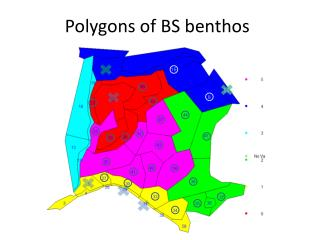 Polygons of BS benthos