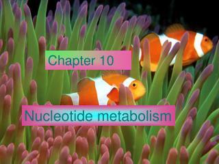 Nucleotide metabolism