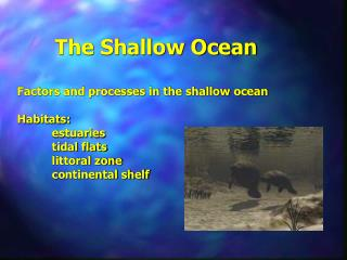 The Shallow Ocean