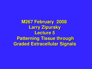 M267 February  2008  Larry Zipursky Lecture 5  Patterning Tissue through