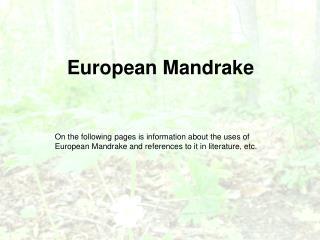 European Mandrake