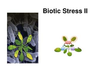 Biotic  Stress II