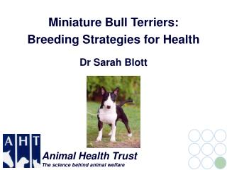 Miniature Bull Terriers: Breeding Strategies for Health Dr Sarah Blott