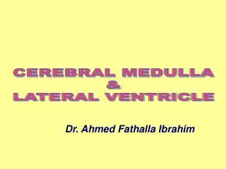 CEREBRAL MEDULLA & LATERAL VENTRICLE