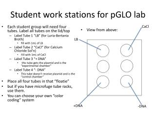 Student work stations for  pGLO  lab