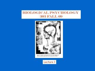 Biological Psychology  303 Fall 09