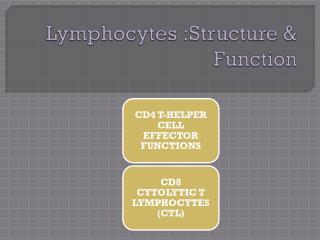 Lymphocytes :Structure & Function