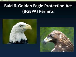 Bald & Golden Eagle Protection Act  (BGEPA) Permits