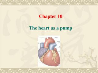 Chapter 10 The heart as a pump