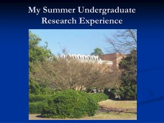 My Summer Undergraduate Research Experience