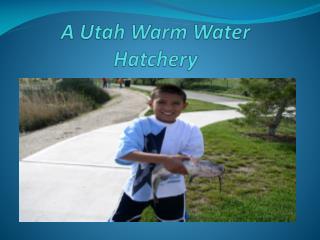 A Utah Warm Water Hatchery