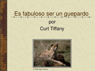 Es fabuloso ser un guepardo