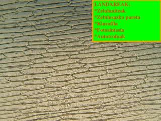 LANDAREAK: *Zelulanitzak *Zelulosazko pareta *Klorofila *Fotosintesia *Autotrofoak