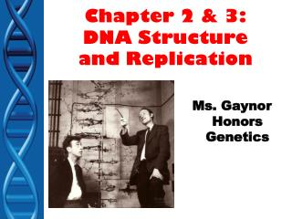 Chapter 2 & 3: DNA Structure and Replication