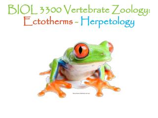 BIOL 3300 Vertebrate Zoology:  Ectotherms  -  Herpetology