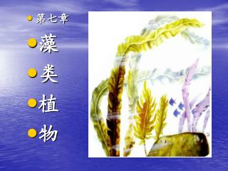 第七章 藻 类 植 物