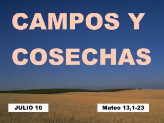 CAMPOS Y  COSECHAS
