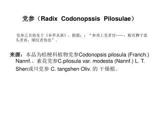 党参( Radix  Codonopssis  Pilosulae )