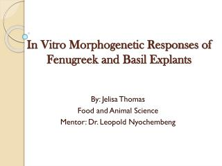 In Vitro Morphogenetic Responses of Fenugreek and Basil Explants