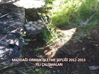 MAZIDAĞI ORMAN İŞLETME ŞEFLİĞİ 2012-2013 YILI ÇALIŞMALARI