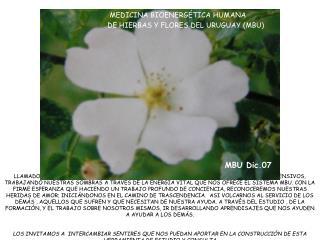 MEDICINA BIOENERGÉTICA HUMANA DE HIERBAS Y FLORES DEL URUGUAY (MBU)