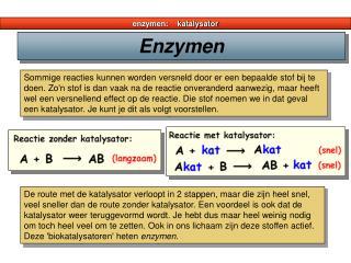 enzymen:    katalysator