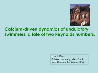 Lisa J. Fauci Tulane University, Math Dept. New Orleans, Louisiana, USA