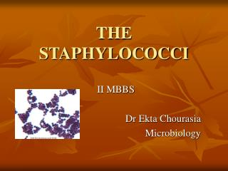 THE STAPHYLOCOCCI